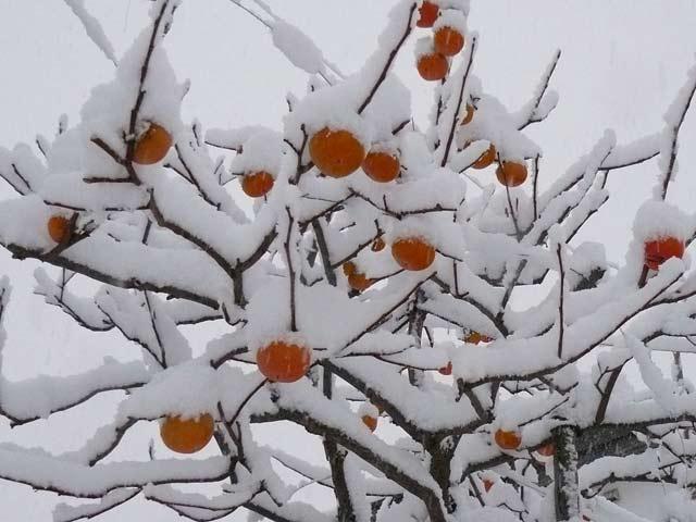 雪景色_d0162994_8433474.jpg