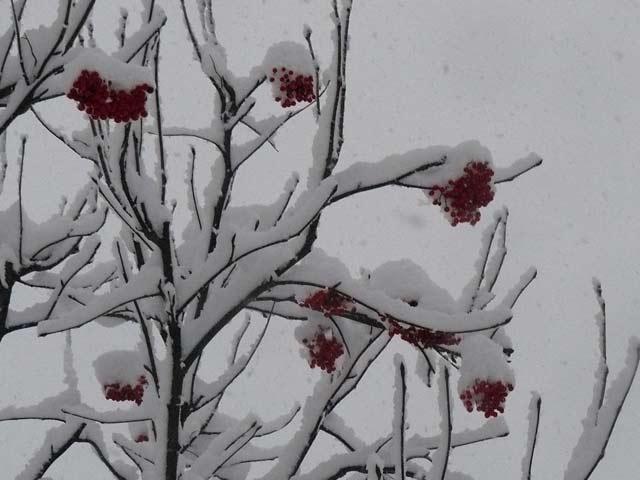 雪景色_d0162994_846387.jpg