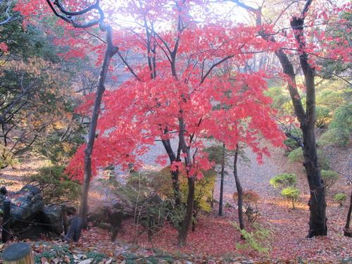 晩秋、千秋公園の紅葉・黄葉・落葉のルクス(lux)・・・その15_c0075701_761912.jpg