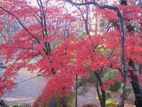晩秋、千秋公園の紅葉・黄葉・落葉のルクス(lux)・・・その15_c0075701_764730.jpg
