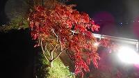 櫨並木のライトアップ!_a0130305_1226545.jpg
