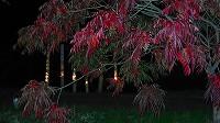 櫨並木のライトアップ!_a0130305_1226985.jpg