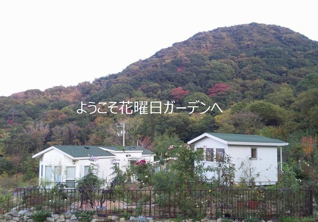 d0172010_652024.jpg