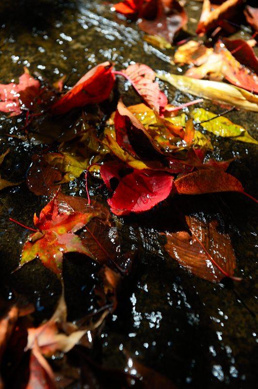 2013京都の紅葉!・勝持寺 其の一_f0032011_19541392.jpg