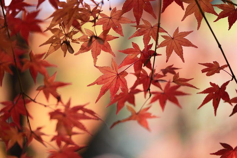 2013京都の紅葉!・勝持寺 其の一_f0032011_1954277.jpg