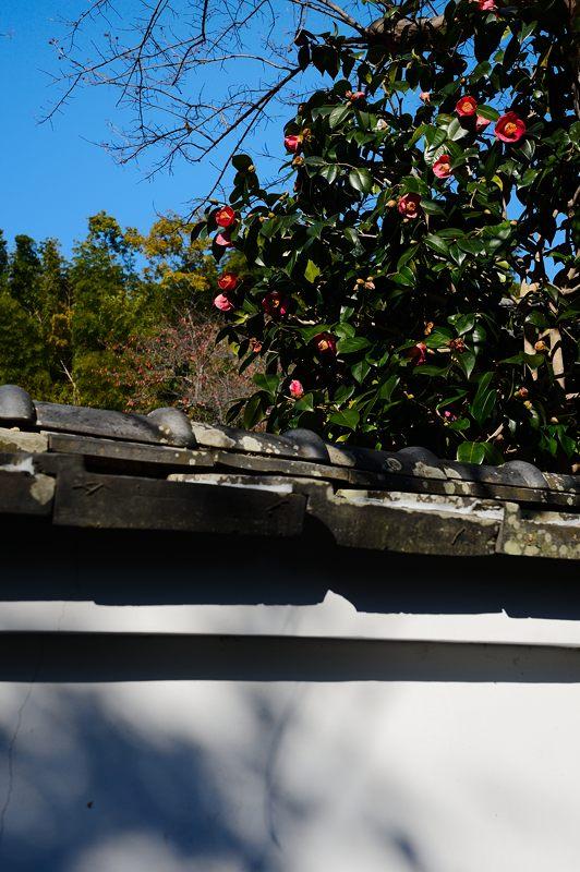2013京都の紅葉!・勝持寺 其の一_f0032011_1955366.jpg