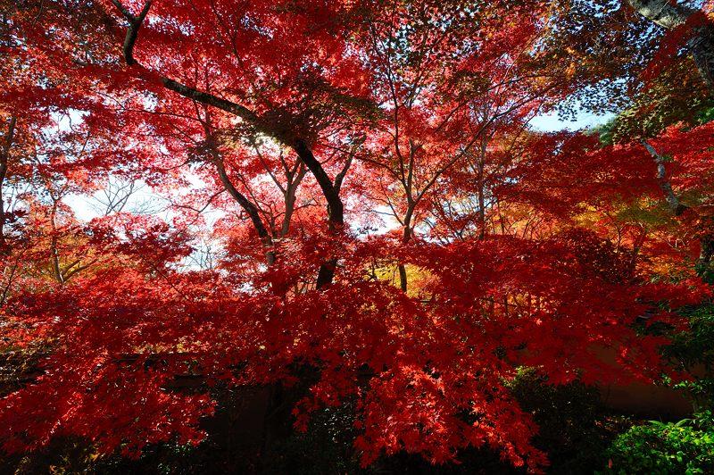 2013京都の紅葉!・勝持寺 其の一_f0032011_19554026.jpg