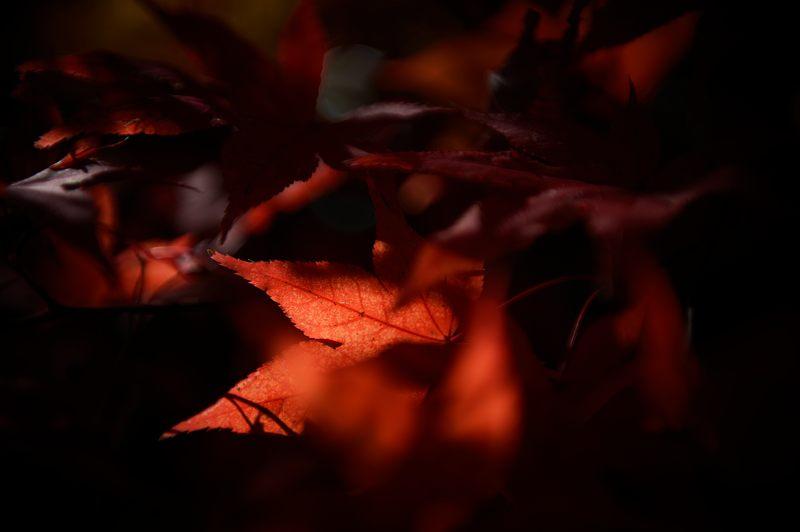 2013京都の紅葉!・勝持寺 其の一_f0032011_19562999.jpg