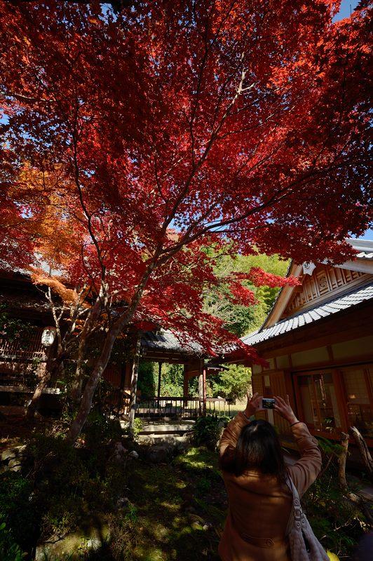 2013京都の紅葉!・勝持寺 其の一_f0032011_19564066.jpg