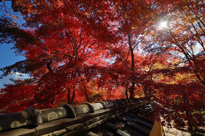 2013京都の紅葉!・勝持寺 其の一_f0032011_19582999.jpg