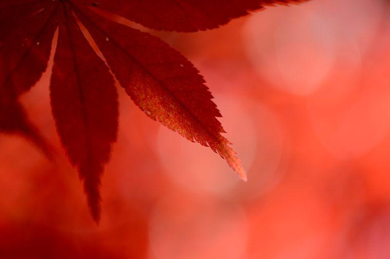 2013京都の紅葉!・勝持寺 其の一_f0032011_19584217.jpg