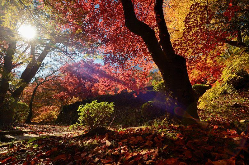 2013京都の紅葉!・勝持寺 其の一_f0032011_195956.jpg