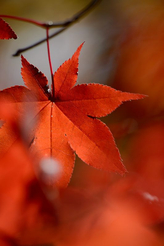 2013京都の紅葉!・勝持寺 其の一_f0032011_20194198.jpg