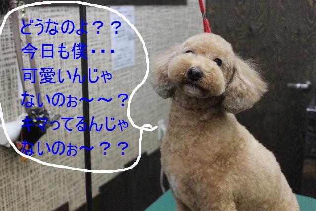 b0130018_2133675.jpg