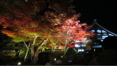 高台寺のライトアップ_c0223630_20545459.jpg