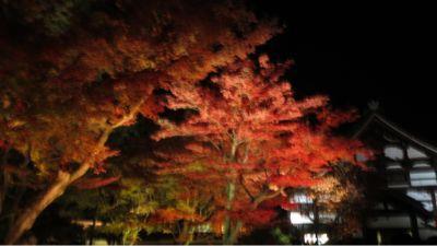 高台寺のライトアップ_c0223630_20545569.jpg