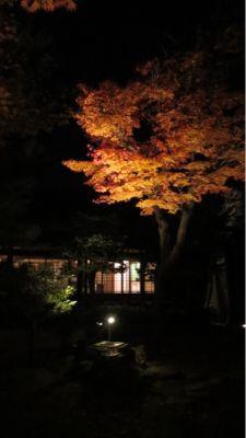 高台寺のライトアップ_c0223630_2054588.jpg