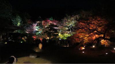 高台寺のライトアップ_c0223630_2055381.jpg
