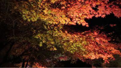 高台寺のライトアップ_c0223630_2055584.jpg