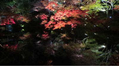 高台寺のライトアップ_c0223630_2055647.jpg