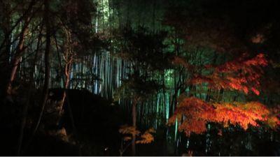 高台寺のライトアップ_c0223630_2055741.jpg