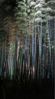 高台寺のライトアップ_c0223630_205584.jpg