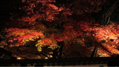 高台寺のライトアップ_c0223630_2055985.jpg