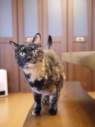 猫のお友だち ワサビちゃん天ちゃんう京くん編。_a0143140_23454870.jpg