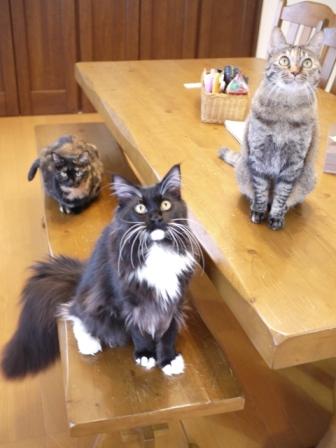 猫のお友だち ワサビちゃん天ちゃんう京くん編。_a0143140_23464077.jpg