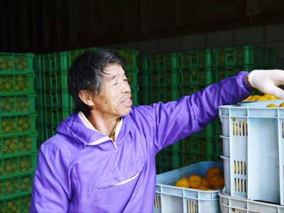 香り高き柚子(ゆず)「あっぱれ」 収穫後の選別作業と保管_a0254656_17581692.jpg