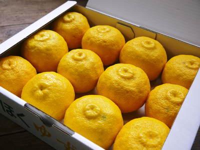 香り高き柚子(ゆず)「あっぱれ」 収穫後の選別作業と保管_a0254656_1771293.jpg
