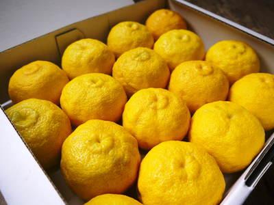 香り高き柚子(ゆず)「あっぱれ」 収穫後の選別作業と保管_a0254656_18322412.jpg