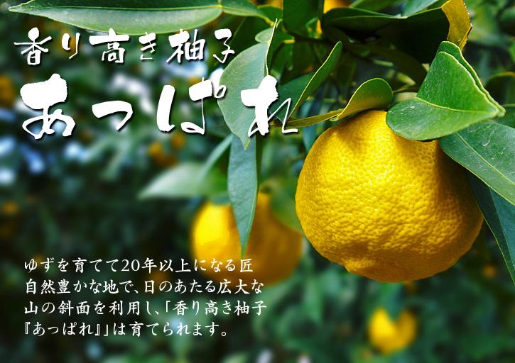 香り高き柚子(ゆず)「あっぱれ」 収穫後の選別作業と保管_a0254656_18371290.jpg