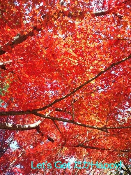 秋のおすそわけ_b0308556_2361489.jpg