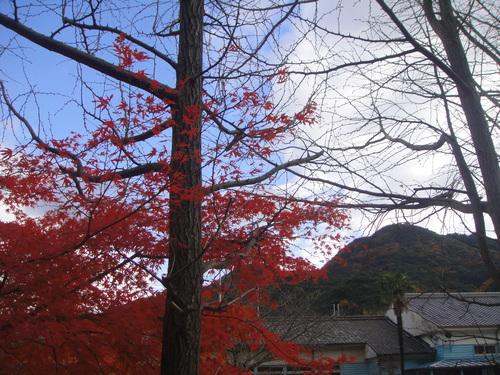 イノシシにやられた階段の補修      by    (TATE-misaki)_c0108460_2022307.jpg