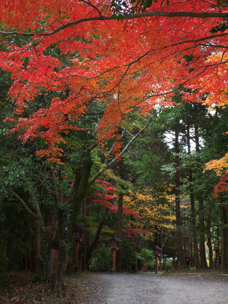 紅葉 2013 <大原野神社>        _f0021869_23523454.jpg