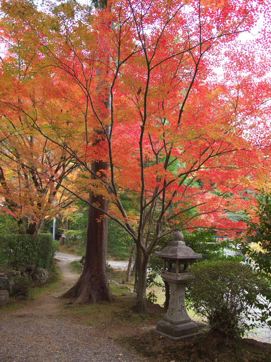 紅葉 2013 <大原野神社>        _f0021869_23525728.jpg