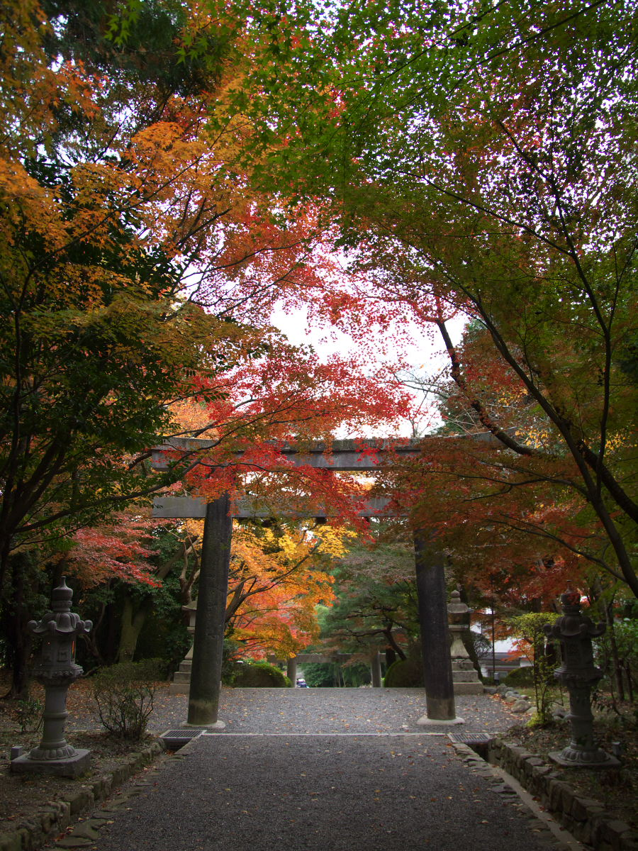 紅葉 2013 <大原野神社>        _f0021869_23525762.jpg