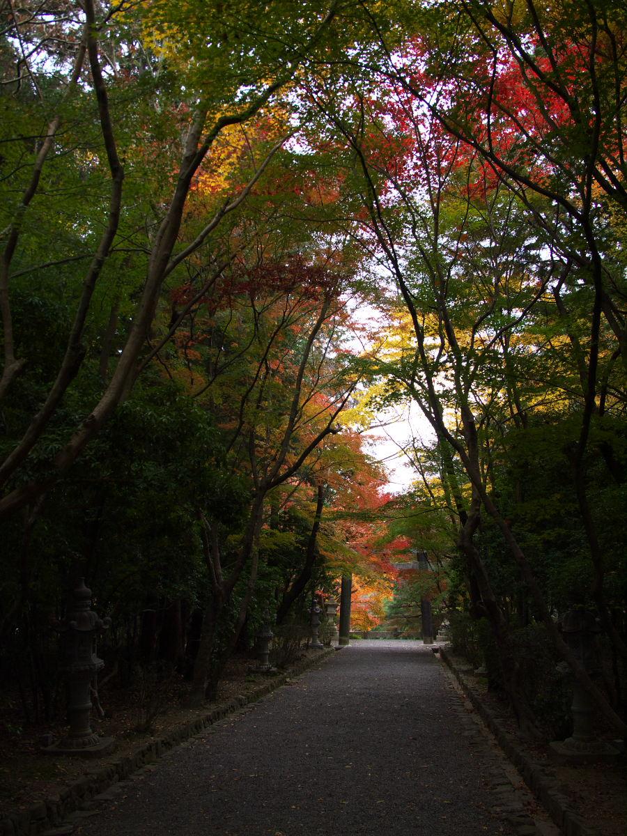 紅葉 2013 <大原野神社>        _f0021869_2354463.jpg