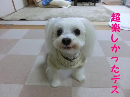 b0193480_1152362.jpg