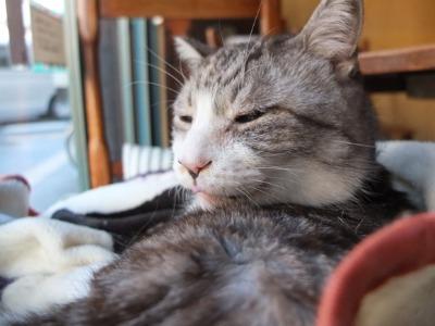 日曜日は猫_a0180681_2155449.jpg