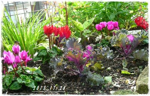 玄関花壇周辺の様子(^_-)_b0096584_22184426.jpg