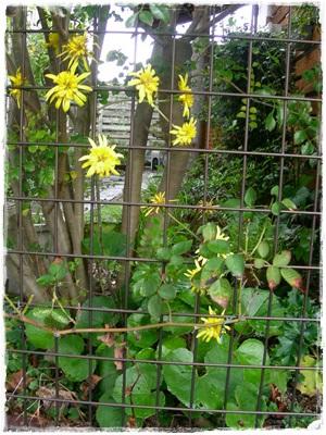 玄関花壇周辺の様子(^_-)_b0096584_2219545.jpg