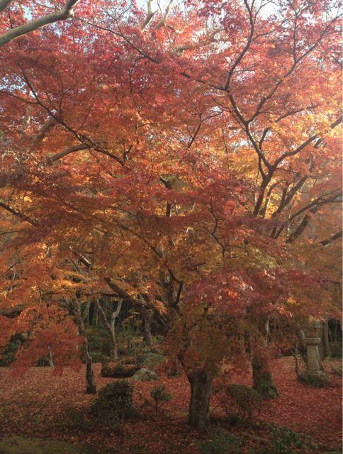 京都の紅葉~一乗寺界隈_e0152493_23233116.jpg