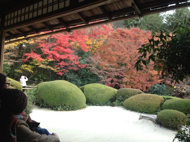 京都の紅葉~一乗寺界隈_e0152493_23234824.jpg