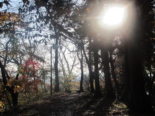 晩秋、千秋公園の紅葉・黄葉・落葉のルクス(lux)・・・その16_c0075701_18552778.jpg
