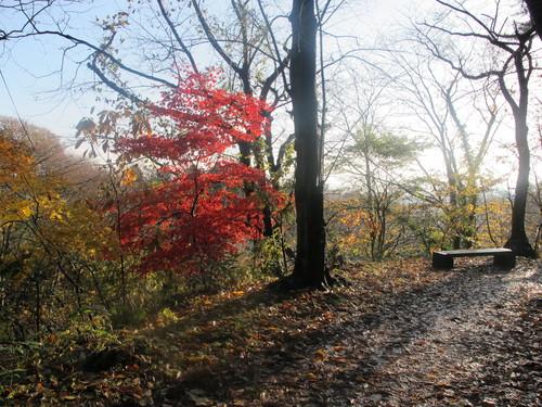 晩秋、千秋公園の紅葉・黄葉・落葉のルクス(lux)・・・その16_c0075701_18554782.jpg