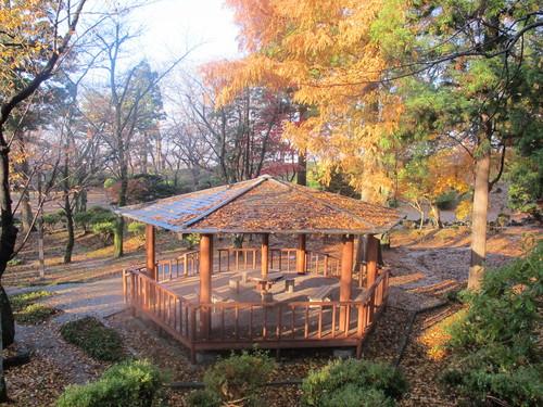 晩秋、千秋公園の紅葉・黄葉・落葉のルクス(lux)・・・その16_c0075701_1855657.jpg