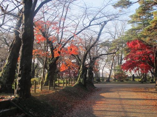 晩秋、千秋公園の紅葉・黄葉・落葉のルクス(lux)・・・その17_c0075701_1914882.jpg