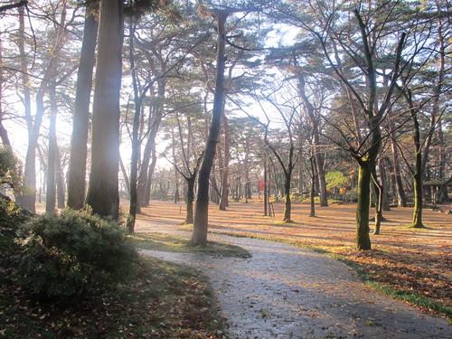 晩秋、千秋公園の紅葉・黄葉・落葉のルクス(lux)・・・その17_c0075701_1922493.jpg